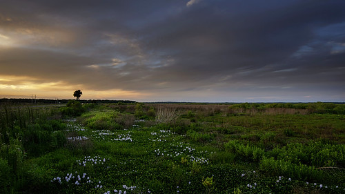 light sunset landscape nikon florida prairie available existing d7000