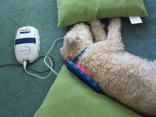Light Therapy for Canine Arthritis