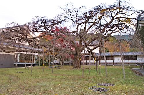 【写真】2012 紅葉 : 醍醐寺/2020-08-07/IMGP6875