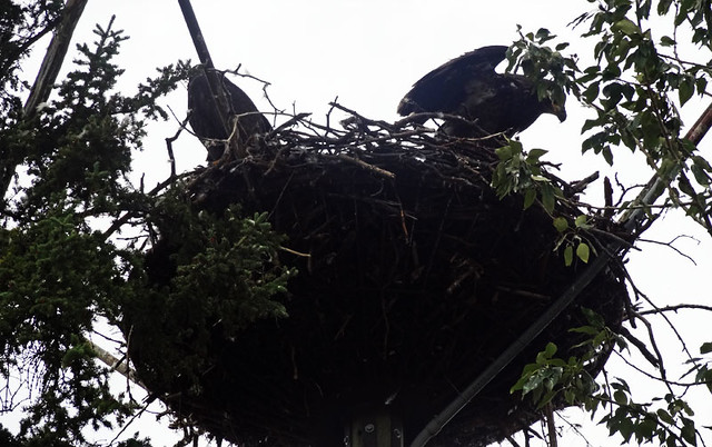 whitehorse-eagles-nest