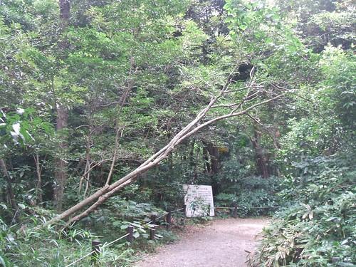 国立科学博物館附属自然教育園 道にかかる樹木