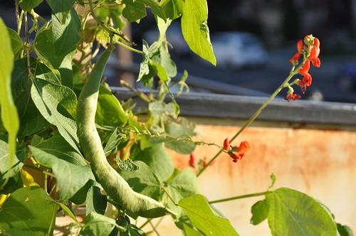 Sept 4 garden