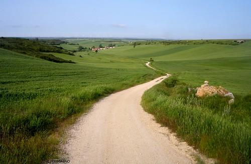 road verde green way landscape countryside spain strada path vert campagna route espana sentiero paesaggio sendero caminodesantiago spagna caminofrances camminodisantiago chemindesaintjacques