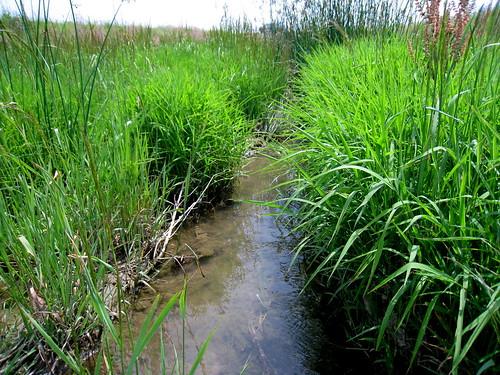 primarysuccession streamrestoration ecologicalsuccession selfformingstreams overwidechannel fluvialbiogeomorphic