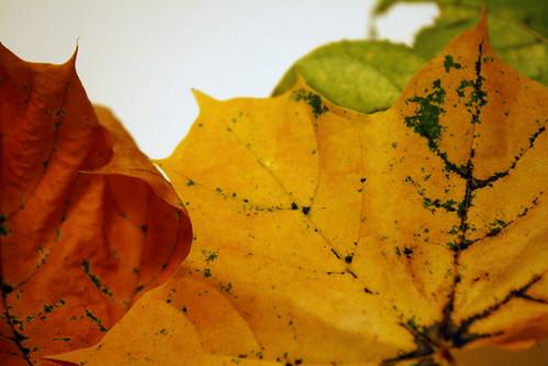 [179/365] Foliage by goaliej54