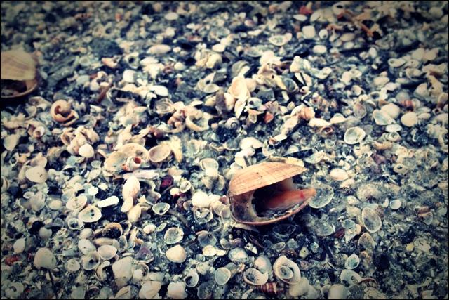 사곶 해변 조개-'백령도 해변'