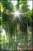 Rising Sun 日本 by Tokyo Tomodachi