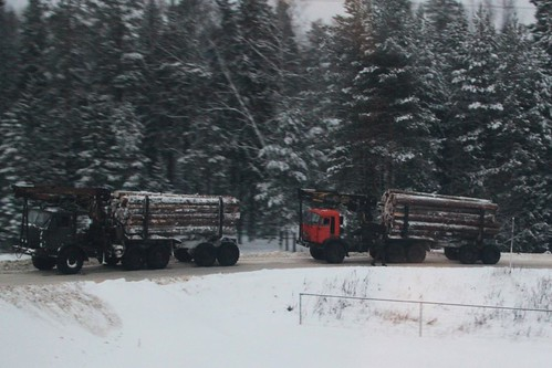 Logging trucks wait to cross the railway line