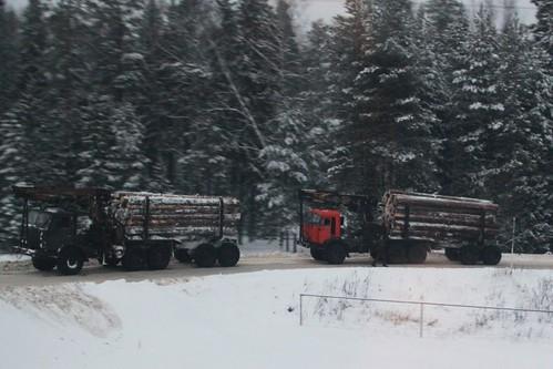 Logging trucks wait to cross the railway line