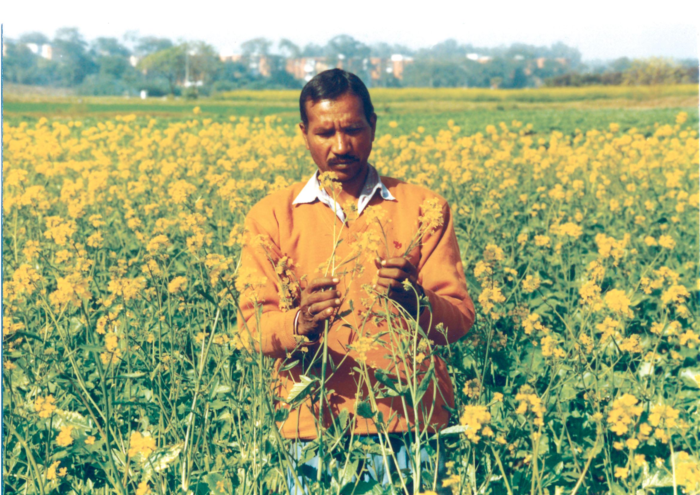 Food Crops in India | AglaSem Schools