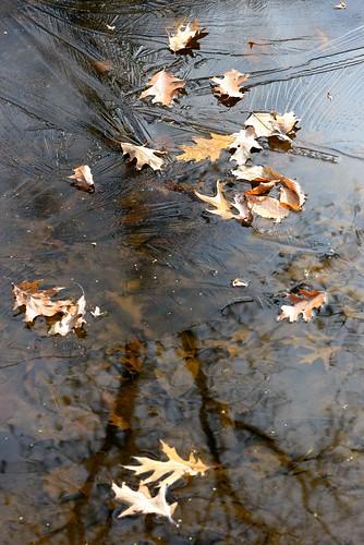 fall ice leaves river frozen nikon d600 devilducmike