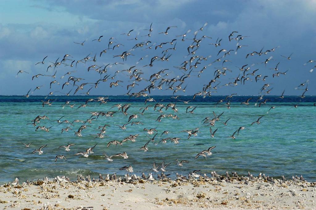 19. Gaviotas en el archipiélago de los Roques. Autor, Whl. travel