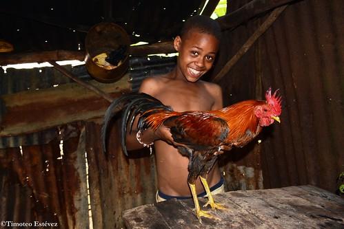 El gallo de Chiquito!