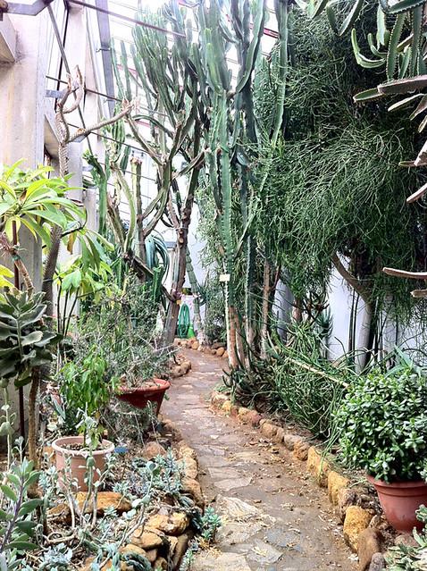 Piante esotiche piante esotiche orto botanico lucca alcune for Vendita piante esotiche