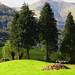 Tout est prêt, les moutons et le bois, Ste Engrâce, Haute Soule, Pays basque, Pyrénées Atlantiques, Aquitaine, France. ©byb64