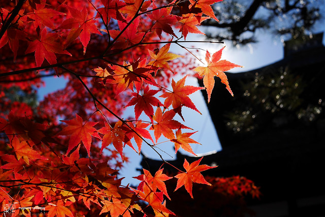 Panasonic_GX7_Kyoto_30