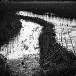 Test reeds