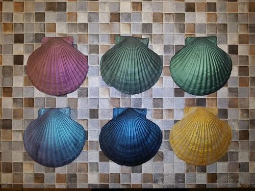 silicone sea-shells