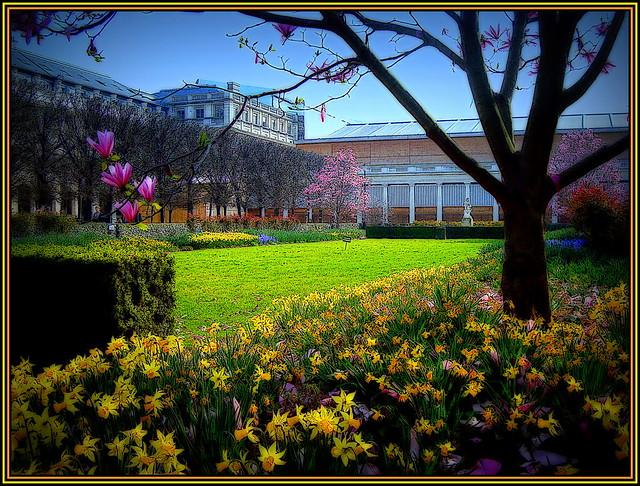 Spring in the Palais Royal's Garden