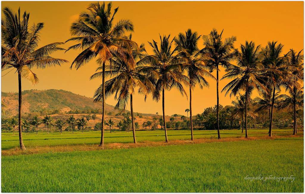 Palakkad -- The granary of Kerala