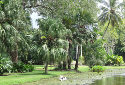 Centenary Lakes - Botanical Gardens - Cairns - 2