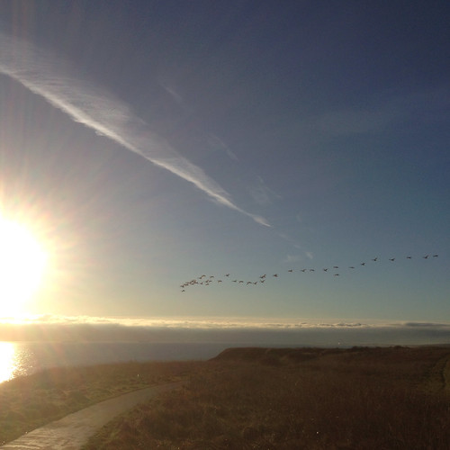Geese migrating. Sunrise.