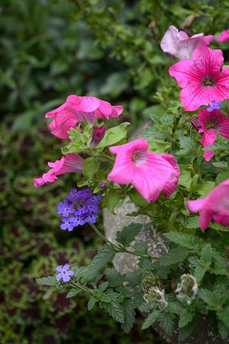 FilipWolak-LSBID-Gardens-8194