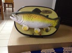 Rocky rainbow trout