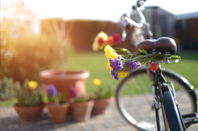 Bike Rides in Spring..
