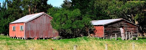Reeds Red Sheds.