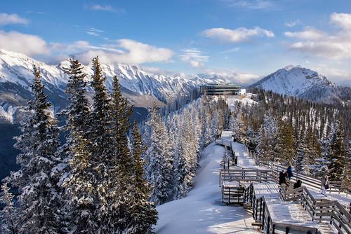 alberta banff banffgondola banffnationalpark canada canadianrockies d750 nikon pinetrees rockies rockymountains snow sulphurmountain winter