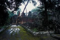 Preah Khan - Jungle Reclaiming