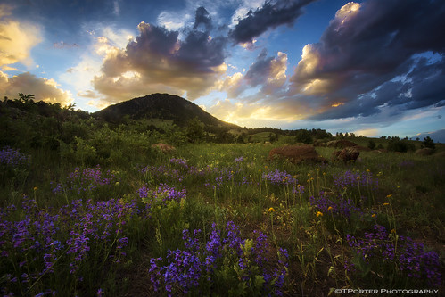 summer sky interesting colorado colorful vibrant dramatic vivid boulder rockymountains wildflowers exciting lastlight tylerporter tporterphotography
