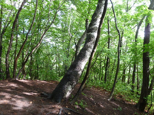 木のベッド ベルツの森
