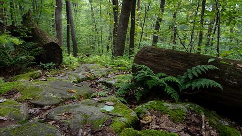 trees plants rocks unitedstates hiking pennsylvania logs smcpda1855mmf3556alwr blueknobsp