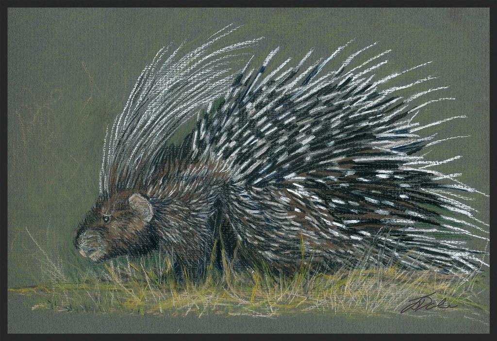 Show us your porcupines...