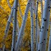 Aspens on June Lake Loop by ewoerlen