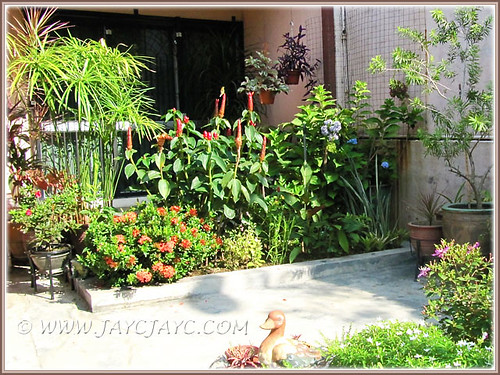 Our garden's flowering and foliage plants at the inner bed, Oct 31 2013