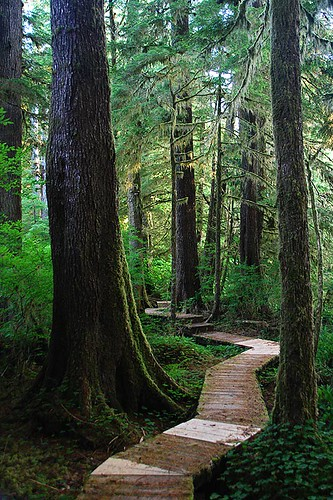 Boardwalk in Carmanah Walbran Park, Carmanah Valley, West Coast Vancouver Island, BC