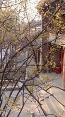 潭柘寺20140308