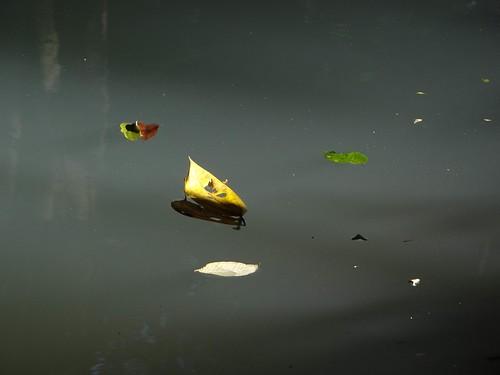 Sobre agua. by Richal Azuarte