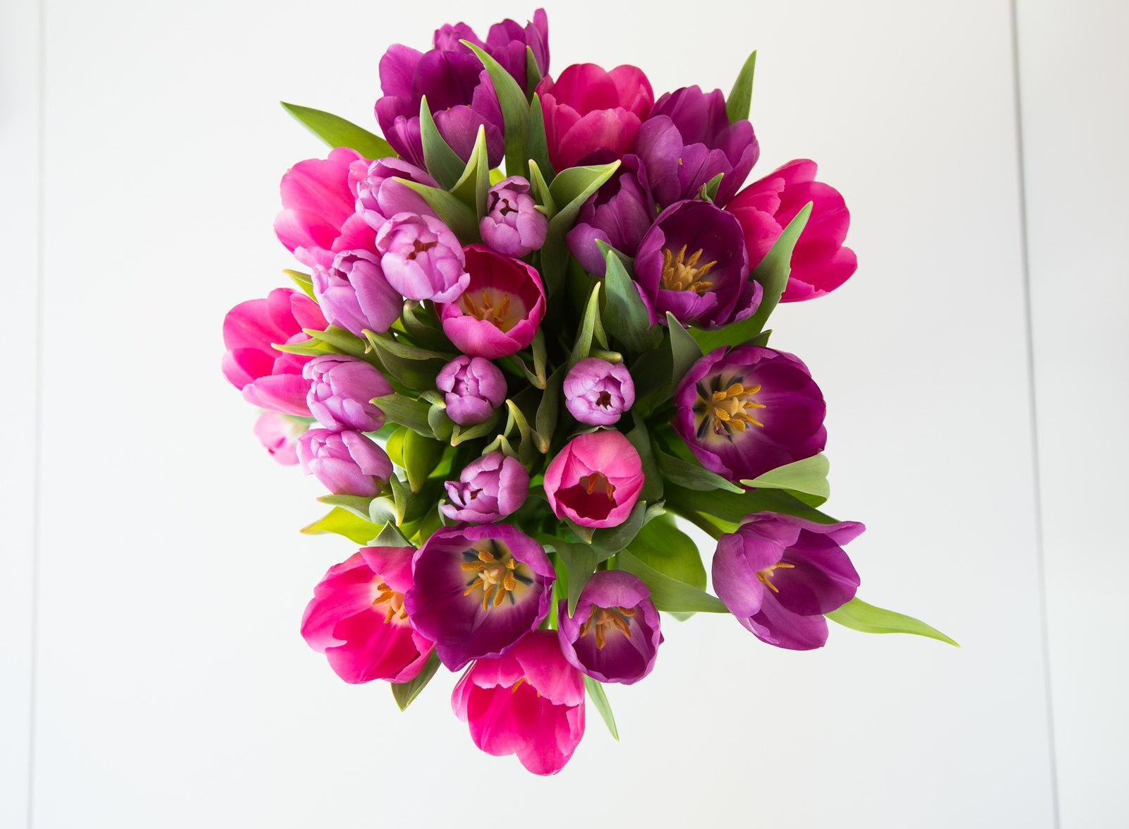 Weekend tulips