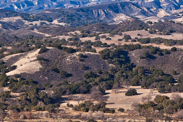 Looking out at the dry, rolling hills of the Santa Ynez Valley