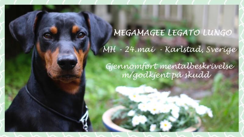 Gjennomført MH m/ godkjent på skudd: Megamagee Legato Lungo 14088483728_a7a656d943_b
