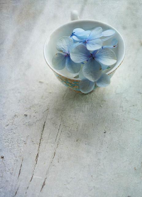 Monday hydrangea in a bowl blues