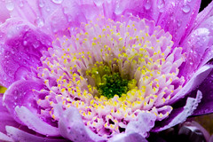 Purple flower water