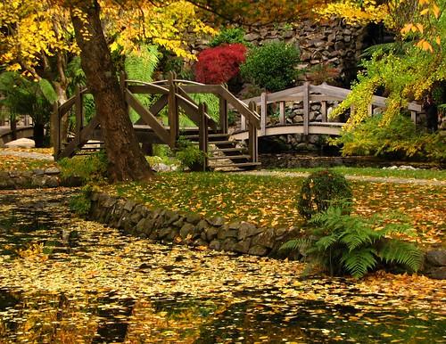 bridge autumn trees lake color colour reflection leaves reflections garden island islands pond landscaping bridges australia melbourne victoria sherbrooke vic gingkobiloba olinda burnhambeeches dandenongranges thedandenongs alfrednicholasgardens alfrednicholasmemorialgardens phunnyfotos