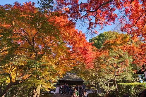 【写真】紅葉 : 法然院