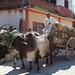 Oxen and cart filled with corn - Carreta con mazorca; Juchitán de Zaragoza, Región Istmo, Oaxaca, Mexico por Lon&Queta