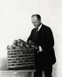 1913 certified seed potatoes